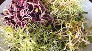 Résultat d'images pour graines germees