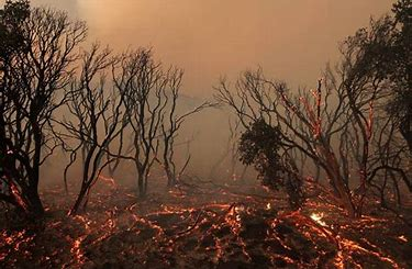 Image result for images fiery environmental devastation global warming