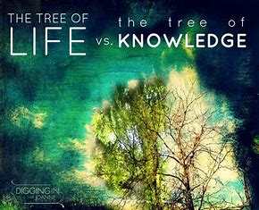 Image result for Tree of the knowledge of good and evil