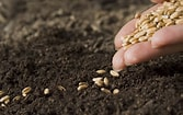 Image result for Free Pics Of Seeds. Size: 167 x 105. Source: www.superhealthykids.com