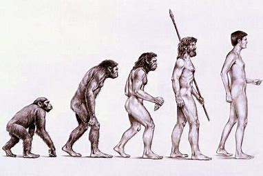 Image result for evolution sequence neanderthal man images