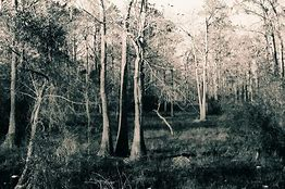 Image result for louisiana landscape