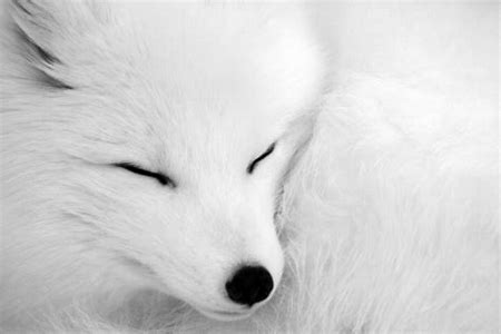 Image result for cuddly fox pics