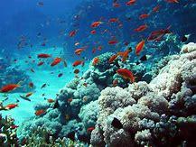 Résultat d'images pour blue bay maurice