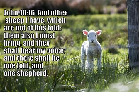 Image result for i have other sheep who are not of this fold
