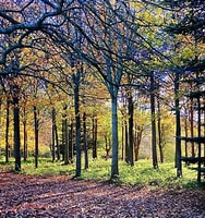 Image result for Treescapes. Size: 151 x 160. Source: www.pinterest.com