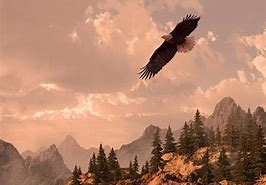 Image result for royalty free picture of flying eagle