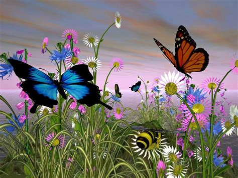 Image result for free pictures of butterflies