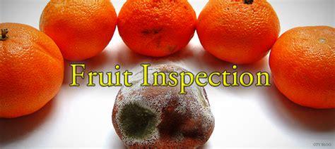 Image result for fruit inspectors