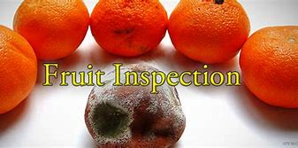 Image result for fruit inspectors