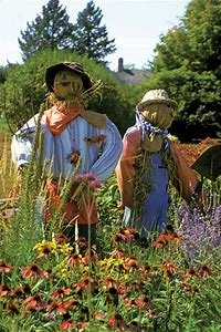 Image result for Best Scarecrow for Garden