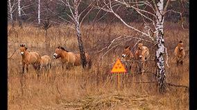 Image result for CHERNOBYL WILDLIFE