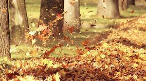 Image result for free picture of autumn leaves in the wind