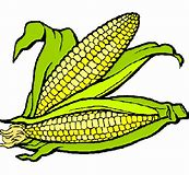 Resultado de imagen de imagen de maíz, frijol, trigo  y arroz
