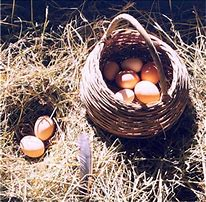 Image result for gathering the eggs
