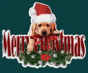 Image result for dog merry christmas