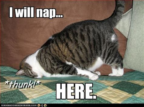 Image result for I Need a Nap Meme