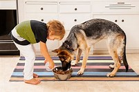 Image result for Free Picture of Child Feeding Dog