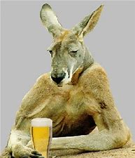 Image result for the most australian photo ever