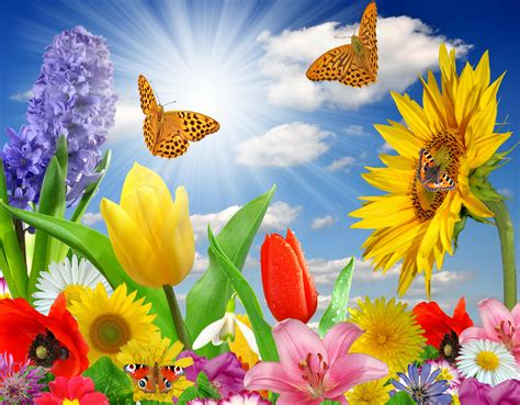Image result for Summer flowers