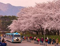 Image result for Where is Yeouido In Korea?. Size: 207 x 160. Source: rove.me