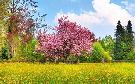 Image result for Spring scenery