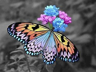 Image result for butterflies and flowers images