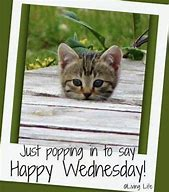 Image result for wednesday hump day humor