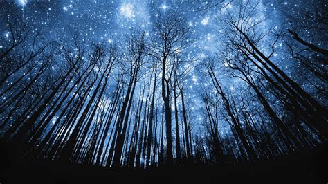 Image result for Trees and Stars at Night