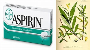 Image result for aspirin and willow bark. Size: 285 x 160. Source: goodnewsplanet.com