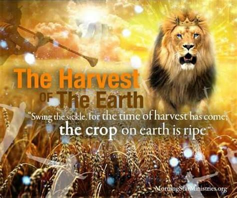 Image result for Three Biblical harvests
