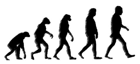 Image result for Apes to Humans