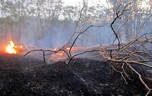 Image result for آتش سوزی جنگلهای بویراحمد