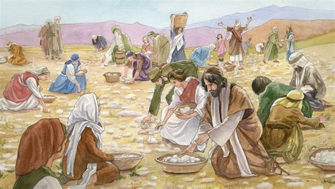 Image result for the israelites ate manna in the wilderness