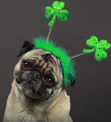Image result for St. Patrick's Day Dog Cartoon