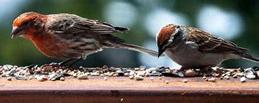 Afbeeldingsresultaten voor vogels in de winter