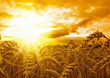 Image result for free images of harvest day