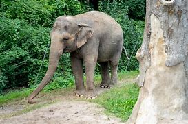 Image result for happy the elephant