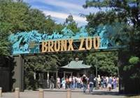 Learn more about Bronx Zoo