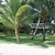 Caribean  Puerto Barrios