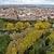 Cope Palencia  Palencia