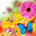 Spring Flowers and Butterflies Background